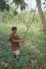 Ayahuasca Vinha